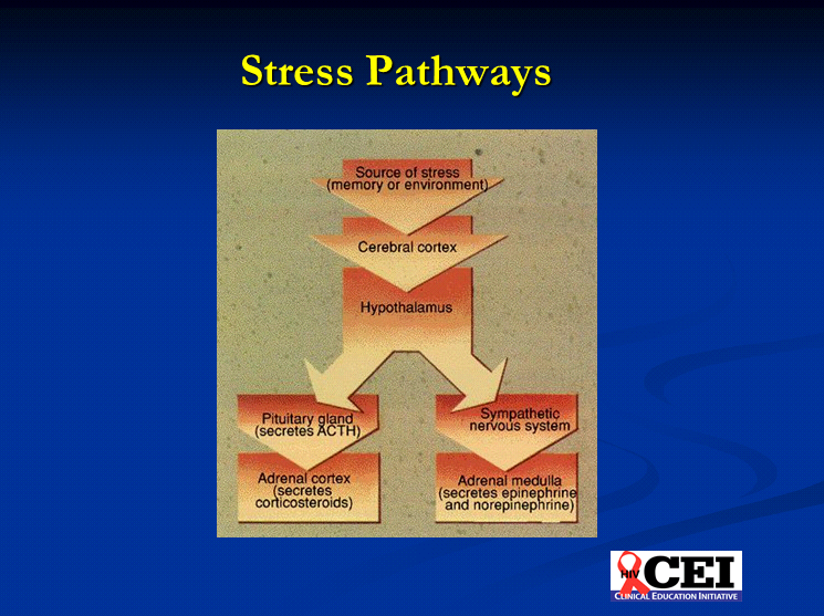 HIV/AIDS and Post-Traumatic Stress Disorder (PTSD)